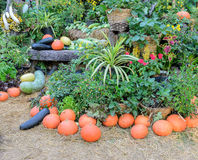 Decorated ripe vegetables garden Royalty Free Stock Photo