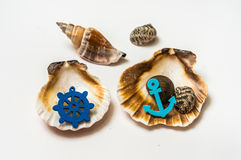 Decorated sea shells with marine wheel and anchor Stock Image