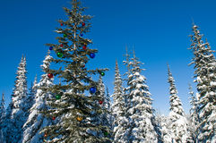 Decorated seasonal tree in a winter forest Stock Photo