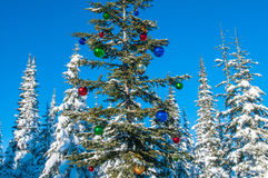 Decorated seasonal tree in a winter forest Stock Image