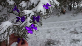 Decorated snowy forest tree with lilac ribbons and Bengal fire in a female hand. Decorations on the Christmas. Winter on the tree in the snow hang the Christmas stock video