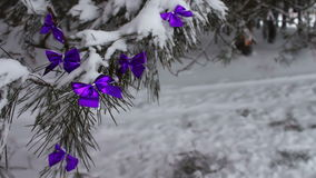 Decorated snowy forest tree with lilac ribbons. Decorations on the Christmas. Winter on the tree in the snow hang the Christmas decorations stock footage