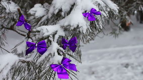 Decorated snowy forest tree with lilac ribbons. Decorations on the Christmas. Winter on the tree in the snow hang the Christmas decorations stock video