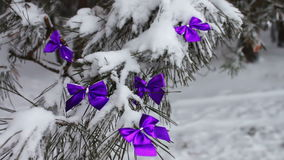 Decorated snowy forest tree with lilac ribbons. Decorations on the Christmas. Winter on the tree in the snow hang the Christmas decorations stock video footage
