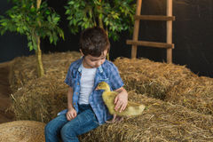 In decorated studio  a pretty boy in a shirt, stroking the goose Royalty Free Stock Images