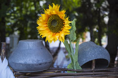 Decorated sunflower fence yard with pots in the village. Royalty Free Stock Images