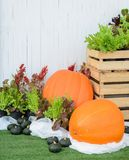 Decorated vegetable garden with pumpkin Royalty Free Stock Image
