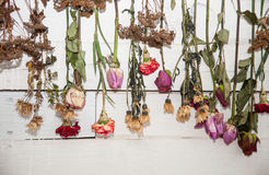 Decorated wall  with dry flowers Stock Photos