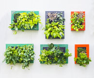Decorated wall in vertical garden Royalty Free Stock Image