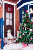 Christmas Dog as symbol of new year Royalty Free Stock Photo