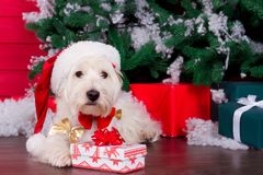Christmas Dog as symbol of new year Royalty Free Stock Image