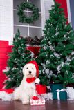 Christmas Dog as symbol of new year Stock Image