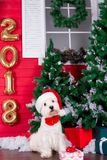 Christmas Dog as symbol of new year Stock Photography