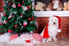 Christmas Dog as symbol of new year Royalty Free Stock Photo