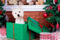 Christmas Dog as symbol of new year Stock Images