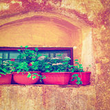 Decorated Window Stock Images