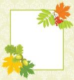 DecoratFrame mit Eicheln, Eberesche und Ahornblättern Stockfotos