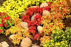 Decoratice nettle grass on asian botanical carden Stock Photography
