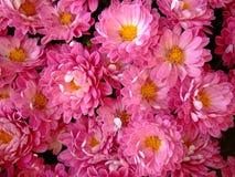 Decoratie met bloemen die op graf worden gevonden. stock foto's