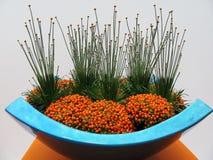 Decoratie met oranje bessen in een blauwe vaas Royalty-vrije Stock Afbeelding