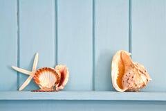 Decoratie met shell en vissen, Royalty-vrije Stock Foto's