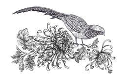 Decoratie met vogel en bloemen De de realistische die fazant en chrysant van de handtekening op witte achtergrond wordt geïsoleer royalty-vrije illustratie