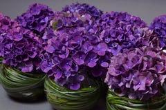 Decoratie van de bloem de violette hydrangea hortensia met gras Royalty-vrije Stock Foto's