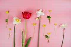 Decoratie van de Dag of de Moederdag van Vrouwen Kader van rode tulpen, narcissen, hyacinten en bloemenmuscari op wit royalty-vrije stock afbeelding