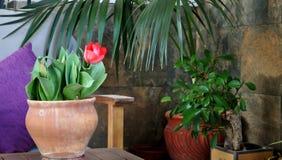 Decoratie van de portiek met rode tulp royalty-vrije stock afbeeldingen