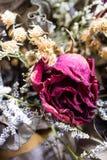 Decoratie van droge bloemen rozen Stock Foto's