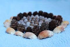 Decoratie van natuurlijk materiaal wordt gemaakt dat: shells van slakken in t wordt gevonden dat Stock Foto