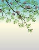 Decoratie van pijnboomtakken stock illustratie