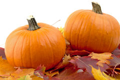 Decoratie van pompoenen met de herfstbladeren voor thanksgiving day op wit Stock Fotografie