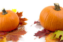 Decoratie van pompoenen met de herfstbladeren voor thanksgiving day op wit Royalty-vrije Stock Fotografie