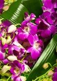 Decoratie voor groetkaart van de orchideeën Stock Afbeelding