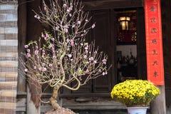 Decoratie voor Vietnamees maan nieuw jaar Tet, met perzikbloesem, geel madeliefje en rode parallelle zinnen op werf van oude land Royalty-vrije Stock Fotografie