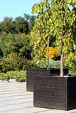 Decoratief boom en bloembed op een achtergrond van groene bomen stock foto