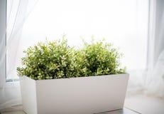 Decoratief Bush van groen gras in de tribune in een zeer heldere roo stock afbeeldingen