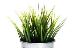 Decoratief Gras in bloempot stock foto