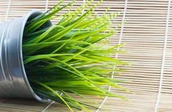 Decoratief groen gras Stock Foto