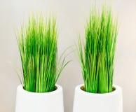 Decoratief groen gras in witte vazen Stock Foto's