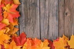 Decoratief kader als achtergrond van de bladeren van de dalingsesdoorn Royalty-vrije Stock Fotografie