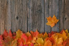 Decoratief kader als achtergrond van de bladeren van de dalingsesdoorn Stock Foto's