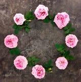 Decoratief kader met roze heldere rozen en bladeren op donkere achtergrond Vlak leg royalty-vrije stock afbeeldingen
