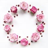 Decoratief kader met roze heldere rozen op witte achtergrond royalty-vrije stock foto's