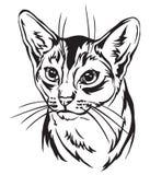 Decoratief portret van Abyssinian-Katten vectorillustratie vector illustratie