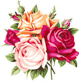 Decoratief uitstekend boeket van rozen Vector bloemen Stock Fotografie