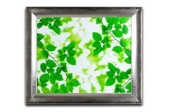 Decoratief zilveren die kader op wit wordt geïsoleerd Groen bladerenpatroon Royalty-vrije Stock Fotografie