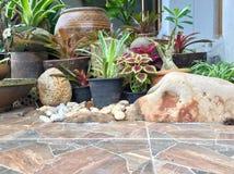 Decoratieinstallatie en steen in tropische tuin royalty-vrije stock afbeelding