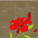 Decoratieve achtergrond met de bloemen van de Hibiscus royalty-vrije illustratie